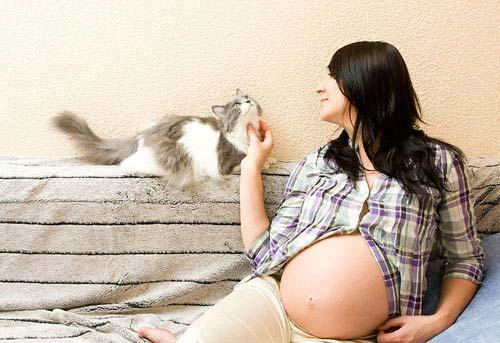 Токсоплазмоз при беременности, или в чем виновата кошка?